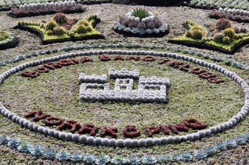 Borgia Bandyklubb 2016 års kaktusmotiv