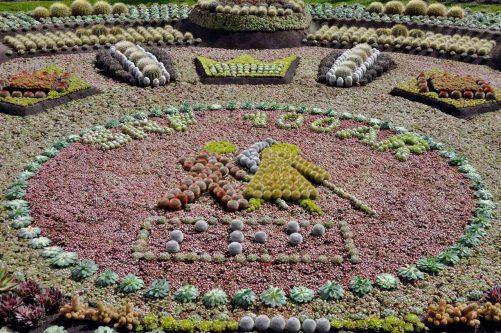 SRF sätter punkt på Kaktusplanteringen